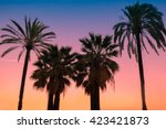 silhouette of tropic palm trees ... | Shutterstock . vector #423421873