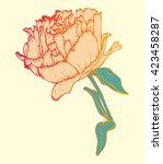 single isolated hand drawn rose | Shutterstock .eps vector #423458287