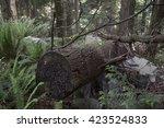 a fallen tree as part of the... | Shutterstock . vector #423524833