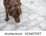 Small photo of Old beaten dog avoids eye-contact with an unknown stranger