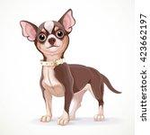 cute little dark chihuahua dog... | Shutterstock .eps vector #423662197