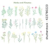 herbs and flowers | Shutterstock .eps vector #423780223