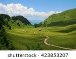 sinuous trail crosses a... | Shutterstock . vector #423853207