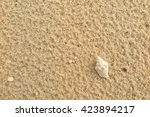 fossil shell on the sand beach | Shutterstock . vector #423894217