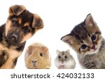 puppy and kitten and guinea pig  | Shutterstock . vector #424032133