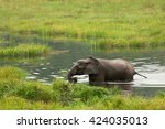 Small photo of African Forest Elephant, Republic of Congo