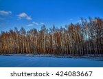 Birch Copse On A Frozen Pond I...