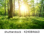 trees with shadows in forest... | Shutterstock . vector #424084663
