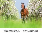 bay horse running full gallop... | Shutterstock . vector #424230433