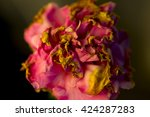 wilted carnation flowers on the ... | Shutterstock . vector #424287283