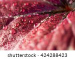 begonia leaves with water drops | Shutterstock . vector #424288423