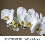 white orchid flowers | Shutterstock . vector #424368727
