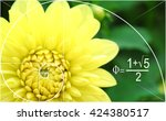 Illustration Of Golden Ratio I...