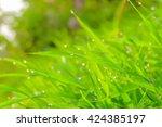 A Selective Focus Of Rain Drop...
