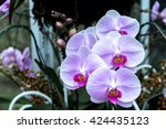 Small photo of White and purple orchids in the park
