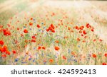 poppy field with sun rays  ... | Shutterstock . vector #424592413