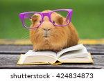 Funny Guinea Pig In Glasses...