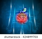 gastrointestinal tract. stomach ... | Shutterstock .eps vector #424899703