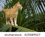 Cute Red Cat Standing On Palm...