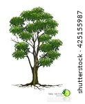 tree on white background tree... | Shutterstock .eps vector #425155987