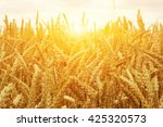 wheat field on sun. | Shutterstock . vector #425320573