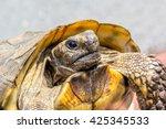 Turtle Head Macro