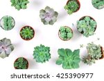 pattern of mixed succulents...   Shutterstock . vector #425390977