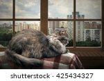 Cat On A Balcony  Lies On The...