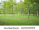 mysterious forest  thailand | Shutterstock . vector #425554993