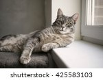 gray kitten is resting in a... | Shutterstock . vector #425583103