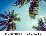 beautiful coconut palm tree on... | Shutterstock . vector #425651953