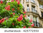 Spring In Paris. Blossoming...