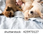 Three Small Puppies Sleeping O...