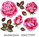 Watercolor set roses flowers, buds, green leaves closeup isolated on white background. Hand painting on paper.