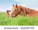 Mare With A Foal Lying In The...