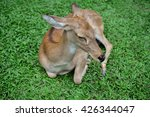Antelope In The Grasslands...
