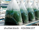 Small photo of Alga Spirulina harvesting farm