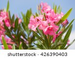Oleander Bush With Pink Flower...