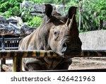 Rhinoceros In The Zoo...