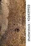 Small photo of texture rind of Alstonia scholaris (L.) at Suan Luang Rama IX Public Park ,Bangkok, Thailand