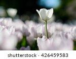 nice flowers background....   Shutterstock . vector #426459583
