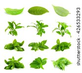 Stock photo green tea leaf tea leaf set group isolated on white background 426533293