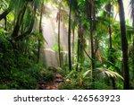 beautiful jungle path through... | Shutterstock . vector #426563923