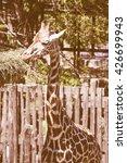 Small photo of Vintage looking Giraffe, Giraffa Camelopardalis (Kingdom Animalia, Phylum Chordata, Class Mammalia, Order Artiodactyla, Family Giraffidae)