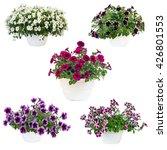 Five Pots Of Petunias Pot ...