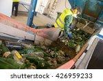 worker is sorting the... | Shutterstock . vector #426959233
