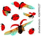 Colorful Ladybug Crawls  Flyin...