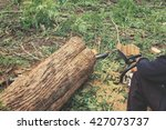 Man Cutting Trees With...