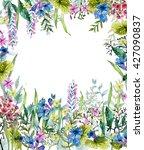 watercolor wild herbs and... | Shutterstock . vector #427090837