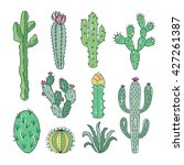 cactus and succulents vector... | Shutterstock .eps vector #427261387